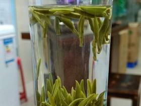 紫阳银针茶多少钱一斤