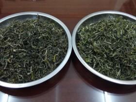 清明紫阳毛尖和明前开园紫阳毛尖干茶有什么区别?