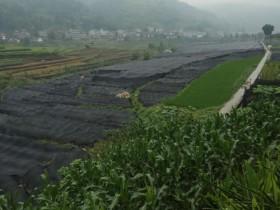 蒿坪镇是紫阳富硒茶茶苗繁育中心