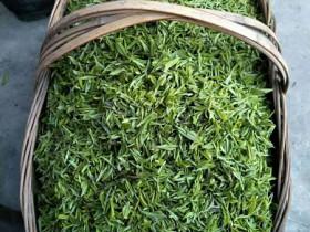 蒿坪毛尖是绿茶吗