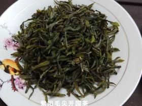 正品紫阳毛尖开园茶价格多少钱一斤