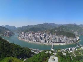 紫阳县高桥镇新栽种茶苗300万株