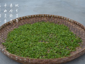 紫阳保健茶
