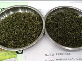 陕西紫阳富硒茶怎么买