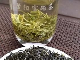 紫阳茶属于什么茶