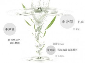 茶氨酸的功效与作用