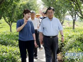农业农村部国际合作司巡视员谢建民来紫阳调研茶产业发展情况